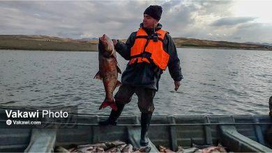 گزارش میدانی واکاوی از صید و فروش ماهی در سقز