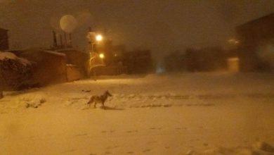 گرگها در شهر
