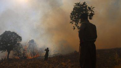 آتش در کمین جنگل ها و مراتع زاگرس در کردستان