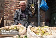 بازار گیاهان بهاری